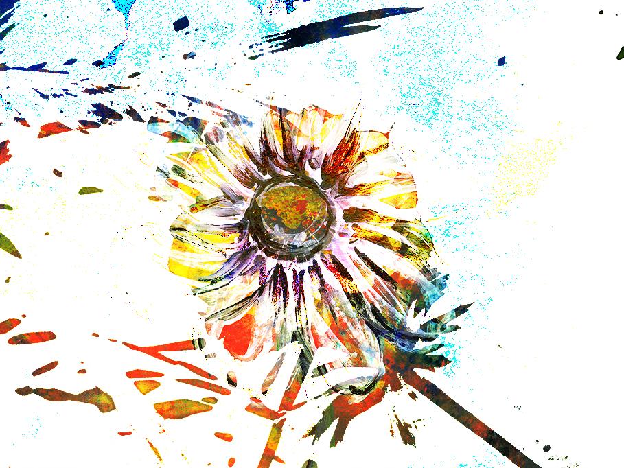 72d02Windflower16